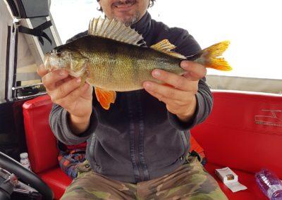 Rybolov Liptovská Mara, ostriež